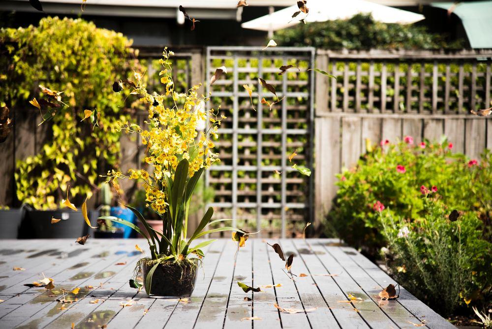 Sådan bruger du græskanter i haven